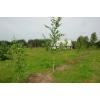 Продаю землю сельхозназначения в Калужской области
